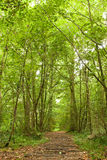 Path through lush forest Royalty Free Stock Photography