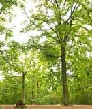 Path through lush forest Stock Photos