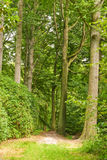 Path through lush forest Royalty Free Stock Photo