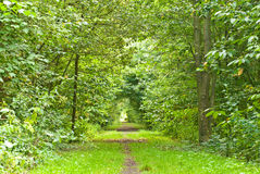 Path through lush forest Stock Image