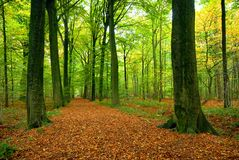 Path through lush forest royalty free stock image