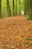 Path through lush forest Stock Photography