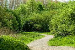 Path through lush forest Royalty Free Stock Images