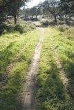 Path through a lush green dehesa Royalty Free Stock Photo