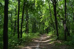 Path through lush green forest park. Summer landscape.  stock photography