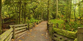 Path through lush rainforest, Cathedral Grove, Canada. A path through lush rainforest. Photographed at the Cathedral Grove on Vancouver Island, Canada Stock Photos