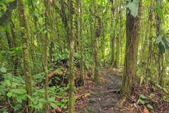 Path in lush rainforest Royalty Free Stock Images