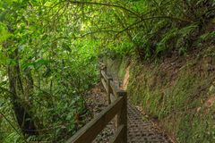 Path in lush rainforest Stock Images