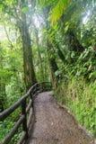 Path in lush rainy rainforest Royalty Free Stock Image