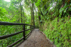 Path in lush rainy rainforest Royalty Free Stock Photo