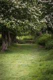 Path through lush shallow depth of field forest landscape in Eng. Path through vibrant shallow depth of field forest landscape in English countryside in Spring Royalty Free Stock Image