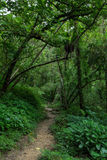 Path in a lush and verdant forest Stock Photos