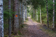 Path made for walking in a beutiful forest Stock Image