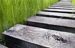Path made of wood over water in a field Royalty Free Stock Photo