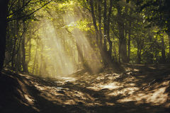 A path through a magical forest. Sun rays through the trees Royalty Free Stock Photography