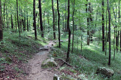 Path in Mammoth Cave National Park Royalty Free Stock Photo