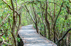 Path in mangrove forest Stock Photo