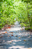 Path in mangrove forest Royalty Free Stock Photography