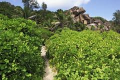 Path in the mangroves on beach Grande Anse Stock Photos
