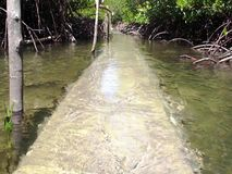 The path through the mangroves flooded water tide. stock footage