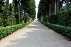 Path with Many Trees on Either Side Royalty Free Stock Image