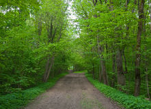 A path in maple park. Stock Photos