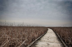 Path in marsh. A wooden path going through marshlands royalty free stock photo