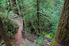 Path at Marymere Falls Royalty Free Stock Photography