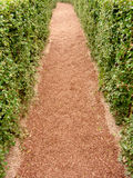 Path in a maze. Path in a hedge maze Stock Images