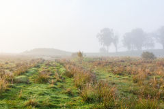 Path in the meadow in morning mist Stock Photos