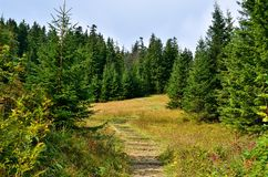 Path on meadow. A pleasant woodland path that runs in the Tatra Mountains stock photo