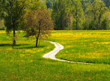 Path in the meadows. A colorful image of a path surrounded by green and yellow meadows Royalty Free Stock Images