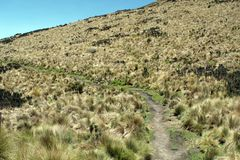Path on the side of a mountain in the Antisana Ecological Reserve, Ecuador Royalty Free Stock Photo