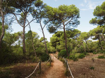 Path in mediterranean forest. This place is located in Menorca, Spain Royalty Free Stock Image