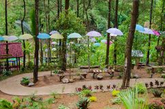 Path in the middle of pine forest. At putri maron park, Trenggalek Indonesia Royalty Free Stock Photos