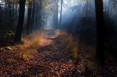 Path in misty autumn forest Stock Image