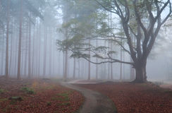 Path in misty autumn forest Royalty Free Stock Photos