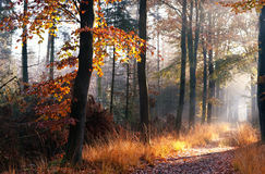 Path in misty autumn forest. In morning Stock Photos