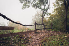 Path in the misty dark forest Stock Photography