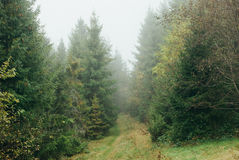 Path in misty forest. Path across misty forest in fall time Stock Images