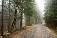 Path through the misty forest Stock Image