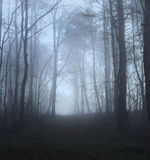 A path through a Misty Forest Stock Photography