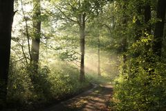 Path through a misty spring forest during sunrise