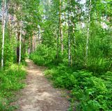 Path in a mixed forest. Summer landscape Royalty Free Stock Photography