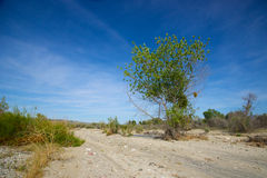 Path Through Mojave Desert Royalty Free Stock Image