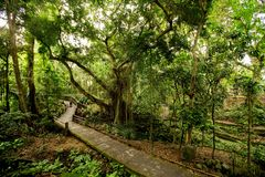 Path in money forest in Ubud on Bali, Indonesia. Path in money forest in Ubud on Bali. Indonesia Royalty Free Stock Image