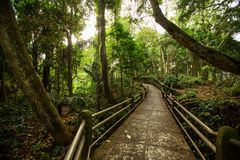Path in money forest in Ubud on Bali, Indonesia.  Stock Photos