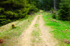Path. Montenegrin Mountains. Carpathian mountains. Ukraine. path in the forest Royalty Free Stock Image