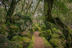 Path in the monumental forest of Sasseto, Lazio, Italy. Europe stock photography