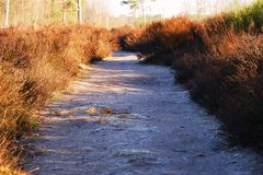 Path and in moorland sunlight royalty free stock images